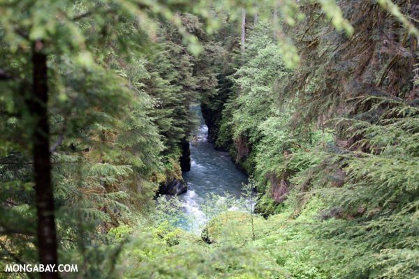 Blue water of the Quinault river [olympic_rainforest_0370]