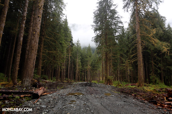 Habitat loss is currently the largest driver of defaunation. Here a logging road cuts into forest in the Pacific Northwest of the U.S. Photo by: Rhett A. Butler.