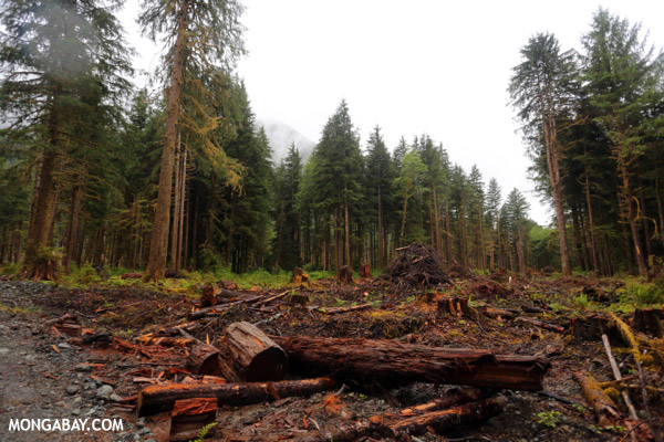 an analysis of deforestation of the pacific northwest A comparative risk analysis of fuelwood use in the pacific northwest 2 fuelwood risk assessment 361 21 harvesting injuries and deaths.