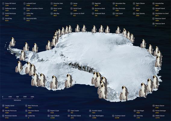 Emperor penguin populations in Antarctica