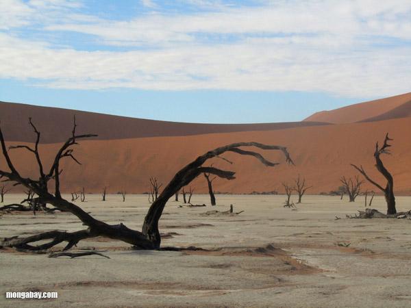 Desert in Namibia. Photo by: Nancy Butler.