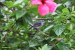 Bird [colombia_3010]