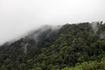 Rainforest of Isla Gorgona