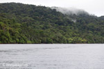 Rainforest of Isla Gorgona [colombia_3022]