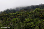Rain forest of Isla Gorgona