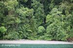 Turquoise sea and rainforest of Gorgona Island [colombia_3039]