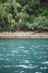 Turquoise sea and rain forest of Isla Gorgona [colombia_3073]