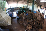 Natural rubber processing facility