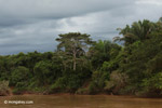 Riparian forest in Colombia