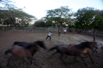Colombian cowboys wrangling wild horses