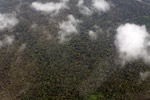 Aerial view of rainforest in Colombia's Choco