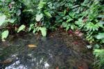 Pond on Gorgona