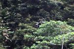 Birds [colombia_4213]