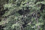Birds [colombia_4234]