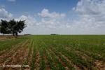 Soy field in Colombia [colombia_4398]