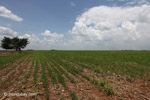 Soy field in Colombia [colombia_4438]