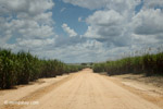 Sugar cane in Colombia [colombia_4489]
