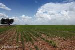 Soy field in Colombia [colombia_4553]