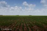 Soy field in Colombia [colombia_4597]