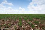 Soy field in Colombia [colombia_4632]
