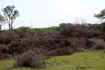 Brush-clearing