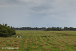 Ranch land in the llanos