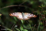 Blue butterfly [colombia_4835]