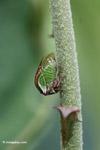 True bug [colombia_4868]