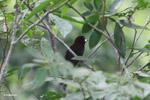 Parrots [colombia_5068]