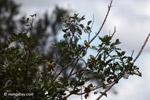 Birds [colombia_5090]