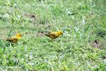 Birds [colombia_5181]
