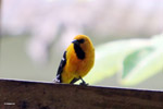 Bird [colombia_5281]