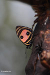 Butterfly [colombia_5333]