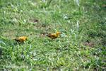 Birds [colombia_5338]