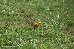 Bird [colombia_5380]