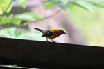 Bird [colombia_5478]