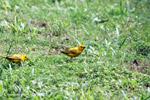 Birds [colombia_5479]