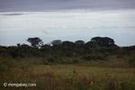Llanos with the Sierra Nevadas del Cocuy