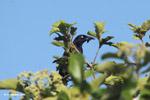 Bird [colombia_5714]