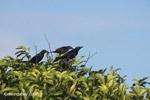 Birds [colombia_5879]