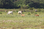 Deer [colombia_5943]