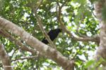 Bird [colombia_6134]