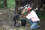 Farmer milking a cow