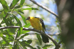 Bird [colombia_6254]