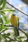 Bird [colombia_6255]