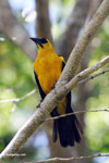 Bird [colombia_6260]