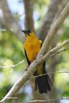 Bird [colombia_6267]