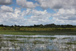 Wetlands in the llanos