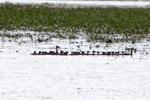 Birds [colombia_6431]