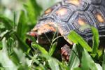 Tortoise [colombia_6497]